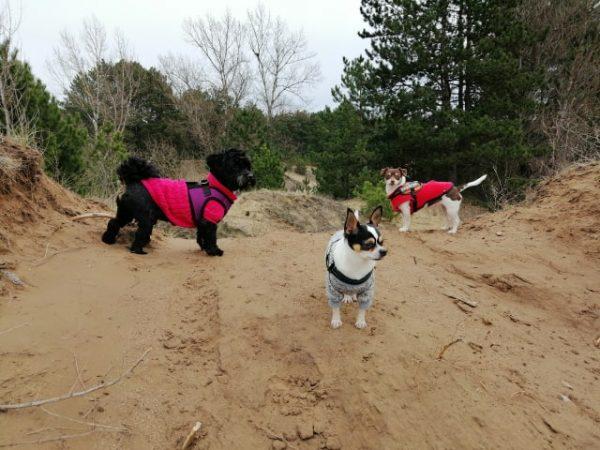 Kutyasétáltatás Bogár Petra tréner