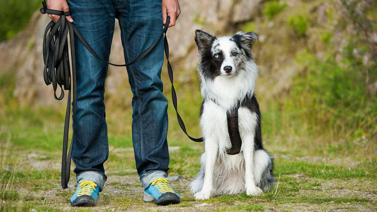 Bogár Petra egyéni kutyaoktatás