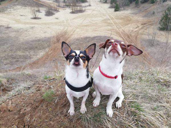 Maylo és Milka Bogár Petra tréner
