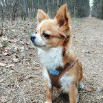 Bogár Petra, kutyasétáltatás
